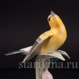 Статуэтка птицы из фарфора Поющая иволга, Hutschenreuther, Германия, 1950-60 гг.